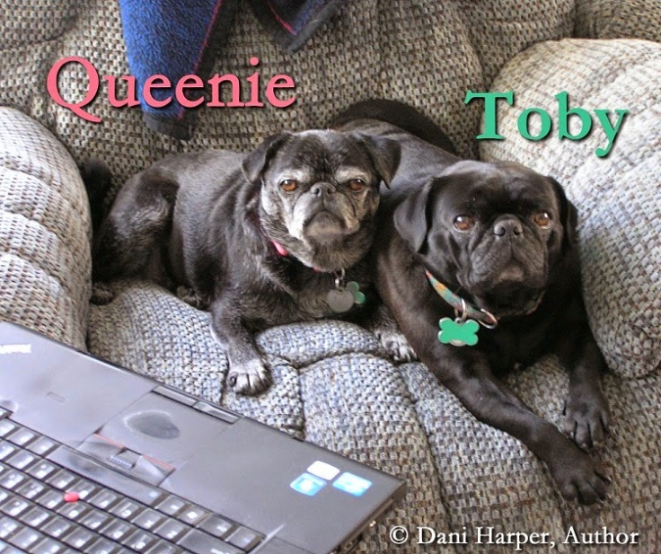 REVIEWER PUGS TOBY QUEENIE
